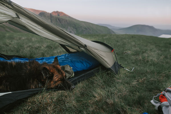 dog in camping tent