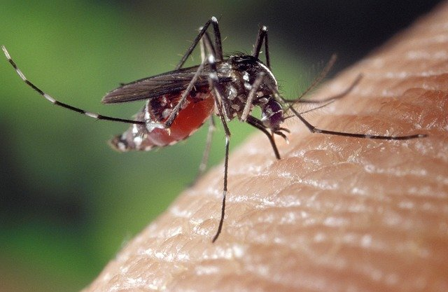 mosquito on skin green background